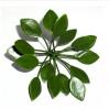 Веточка листьев 5,5-10см с отверстием для стебля, пластик, уп. 10 шт.